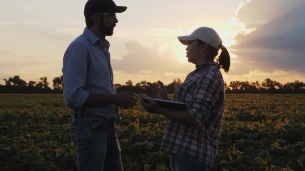 Farmers are talking while standing in a field