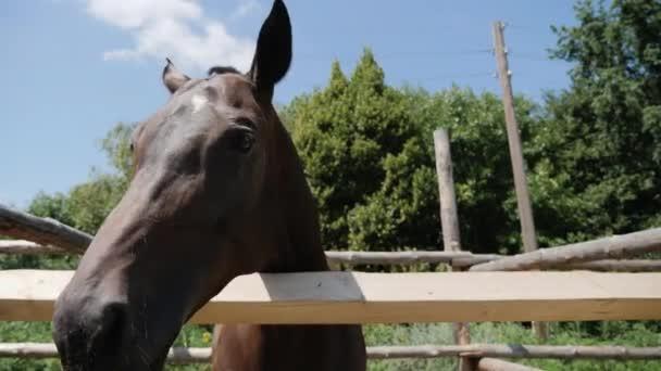 Hnědý kůň ve výběhu venku