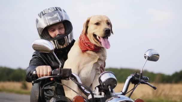 Labrador olizuje obličej kluci v motocyklové helmě