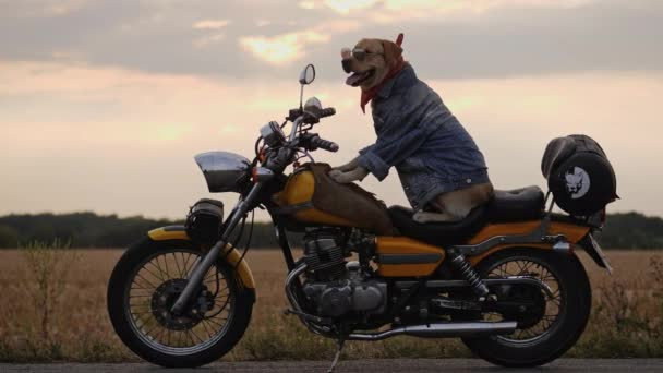 Side view of a labrador dog sitting on a motorcycle at sunset