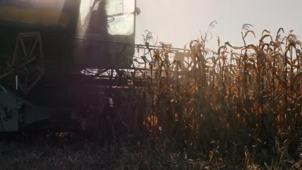 Combinare raccolta mais in un campo dellazienda agricola