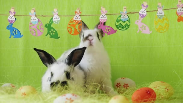 Easter decoration with two bunnies