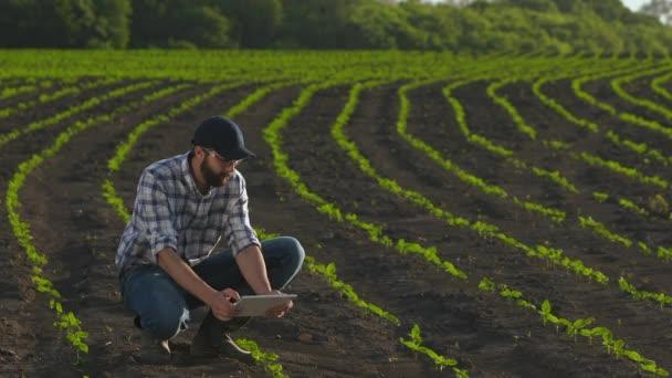 Zemědělec používá tabletu v oblasti mladé slunečnice