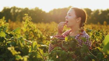 Young woman eats fresh, red raspberries