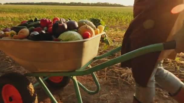 Farmář válí kolečko se zeleninou