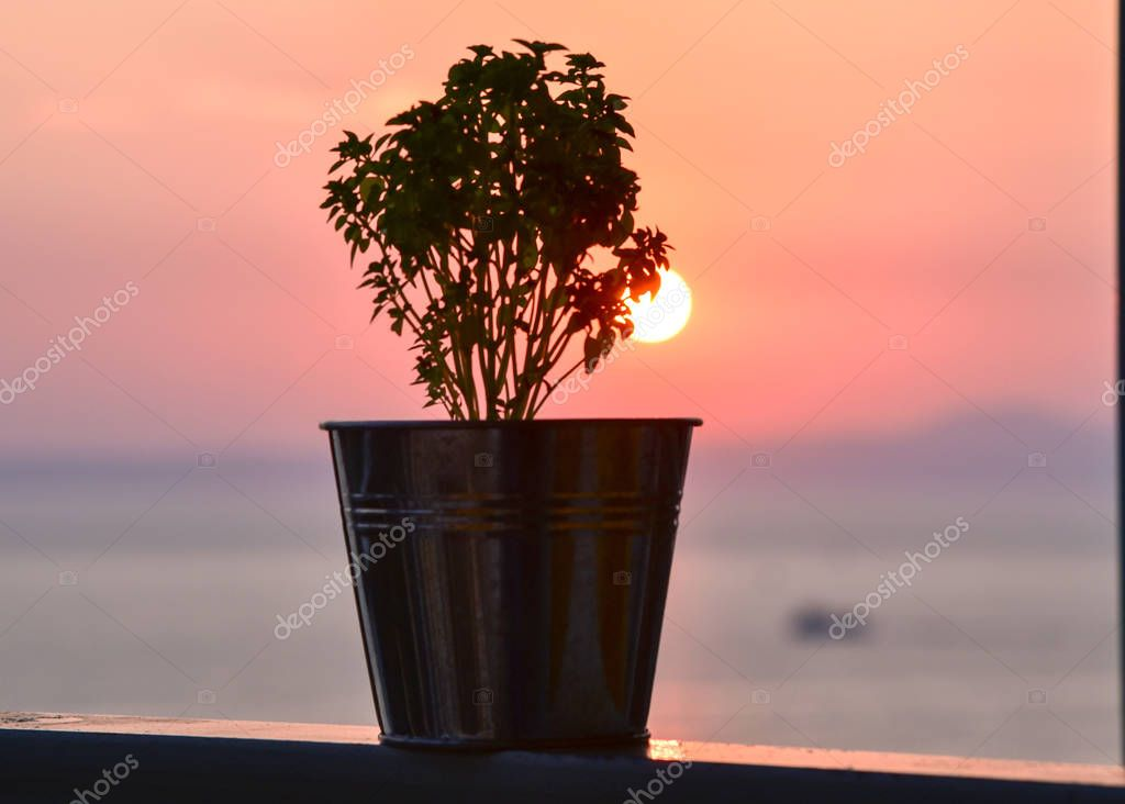 The sunset sun is looking out from behind the flower pot on the sea background