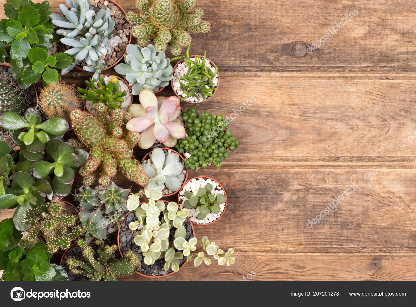 Cute Succulent Plants Wooden Background Copy Space Top View Stock Photo Image By C Photkas 207201278
