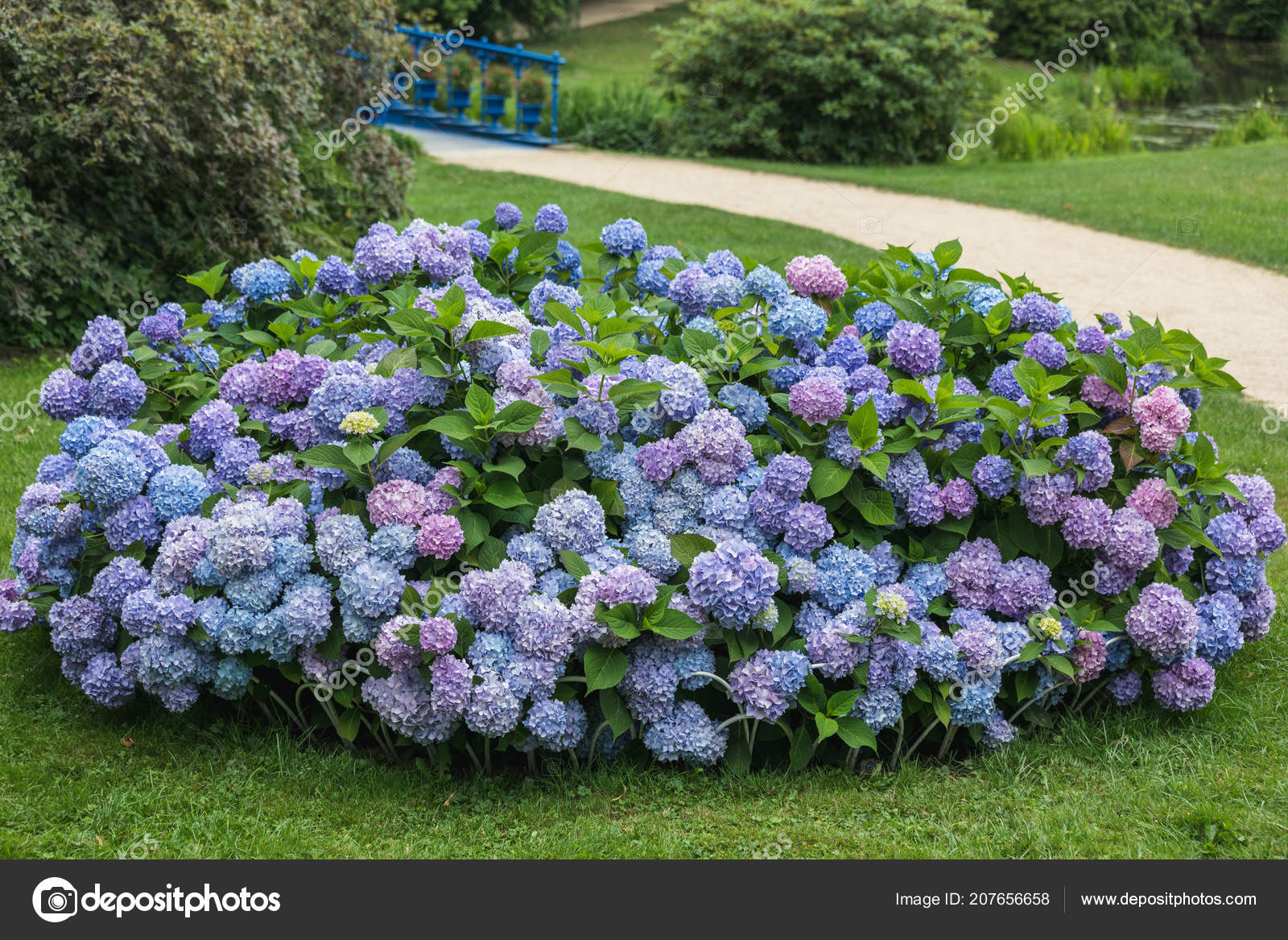 Beautiful Flowers Fuerst Pueckler Park Bad Muskau Germany Stock