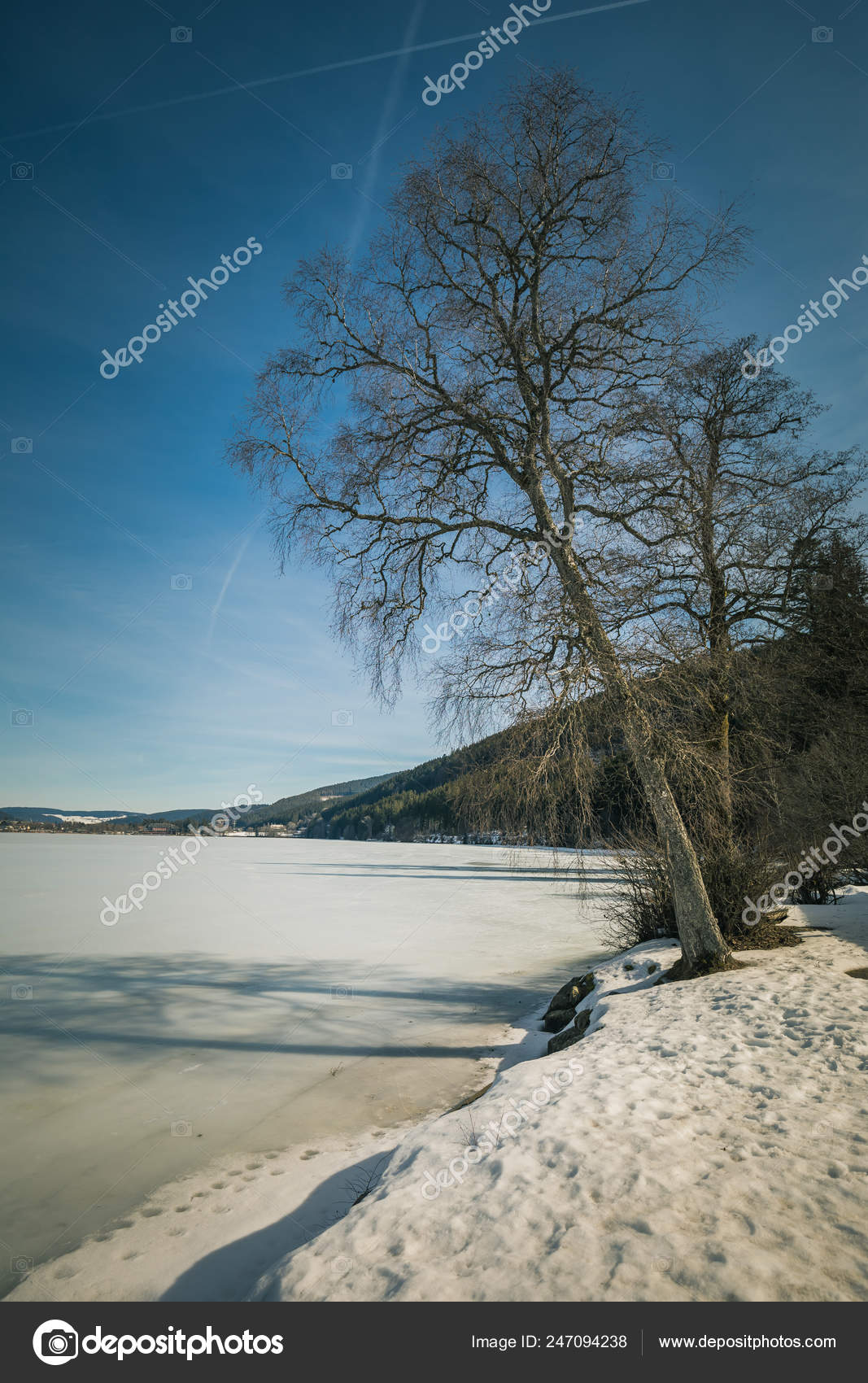 Winter Landscape Frozen Titisee Black Forest Germany Stock Photo C Mbruska 247094238