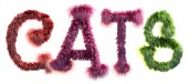 3d rendering of word CATS writing with funny fluffy letters isolated on white background, red cat furry text
