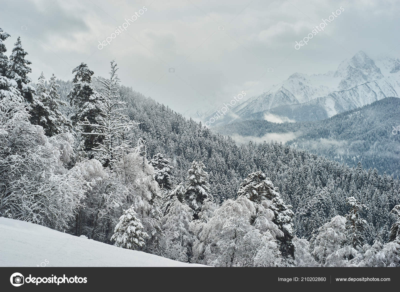 Snow Covered Fir Trees Background Mountain Peaks Panoramic View Picturesque Stock Photo Image By Garik Koen 210202860