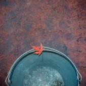 Mokré červený javorový list leží na okraji plechovém kbelíku. Pohled shora, kopírovat prostor. Pojem přišel podzim.