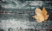 Žluté podzimní javorový list leží na staré dřevěné lavici. Kopie prostor, pohled shora.