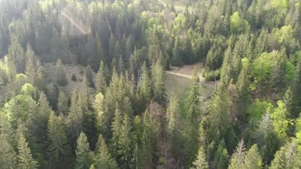 Let nad v lese v horách. Letecký pohled na ukrajinských Karpat