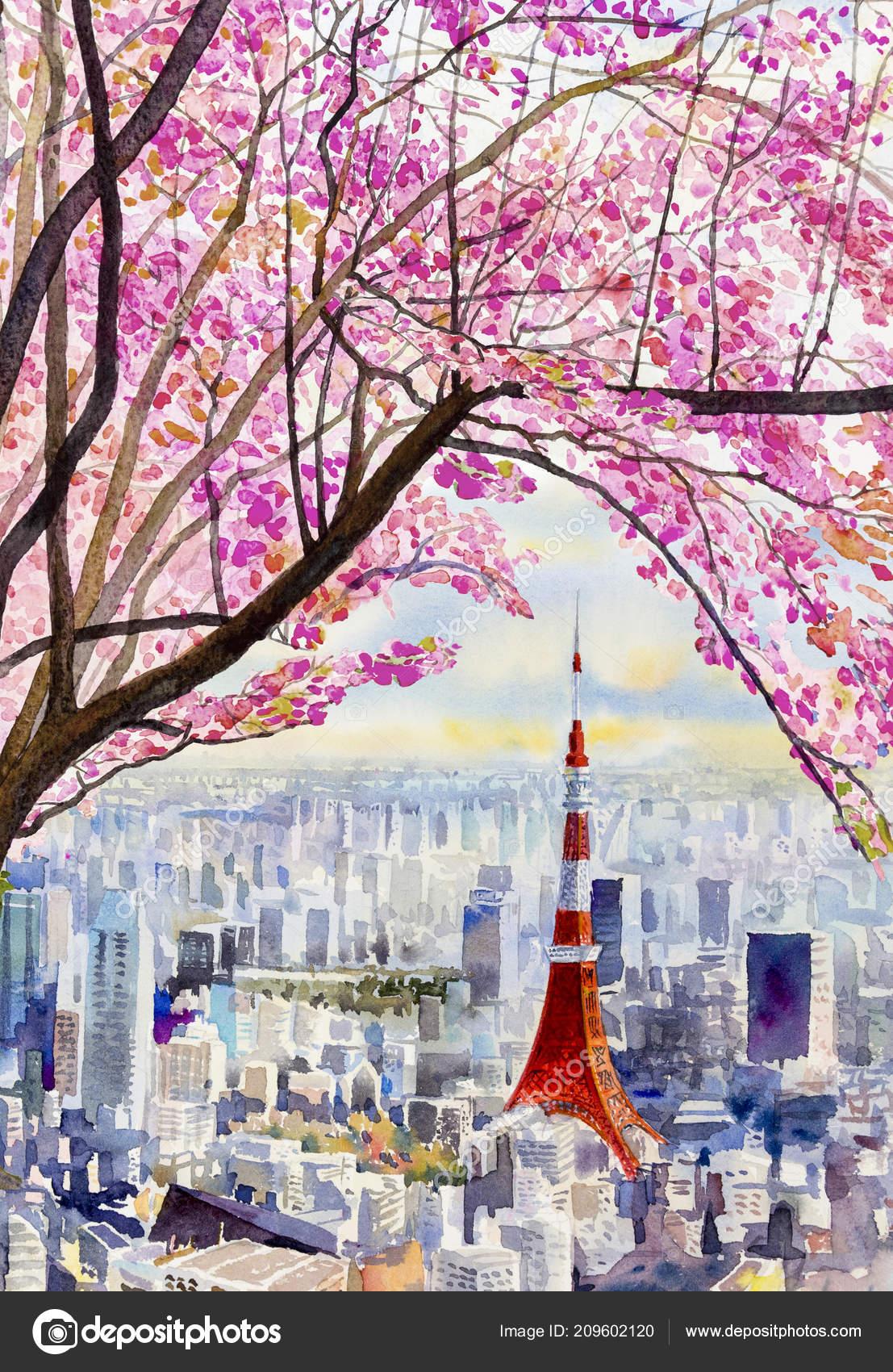 Pleine Floraison Fleurs Sakura Fleur Cerisier Tokyo Tour Japon