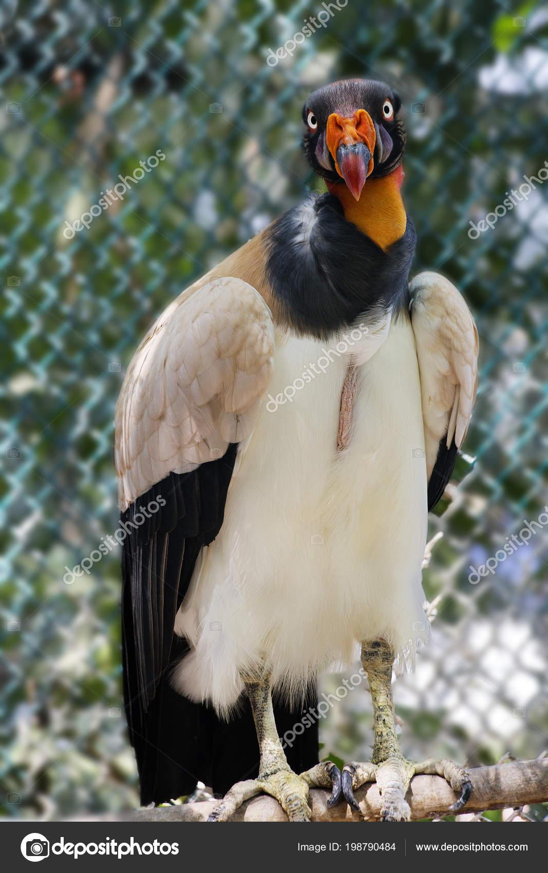 νέος τύπος μεγάλο πουλί ώριμη όργια κανάλι
