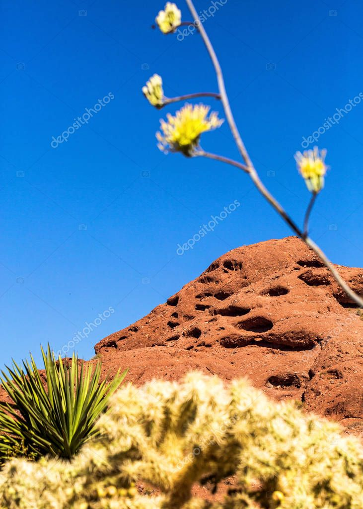 Papago Mountain Park with cactus and wildflowers in foreground