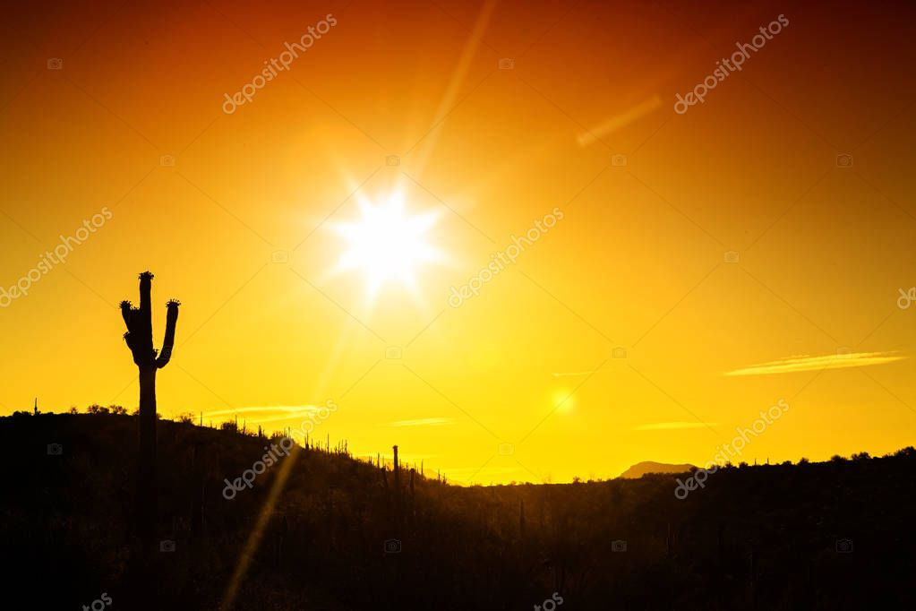 Silhouette of single saguaro cactus in the Sonoran Desert of Arizona with copy space in golden sunrise or sunset