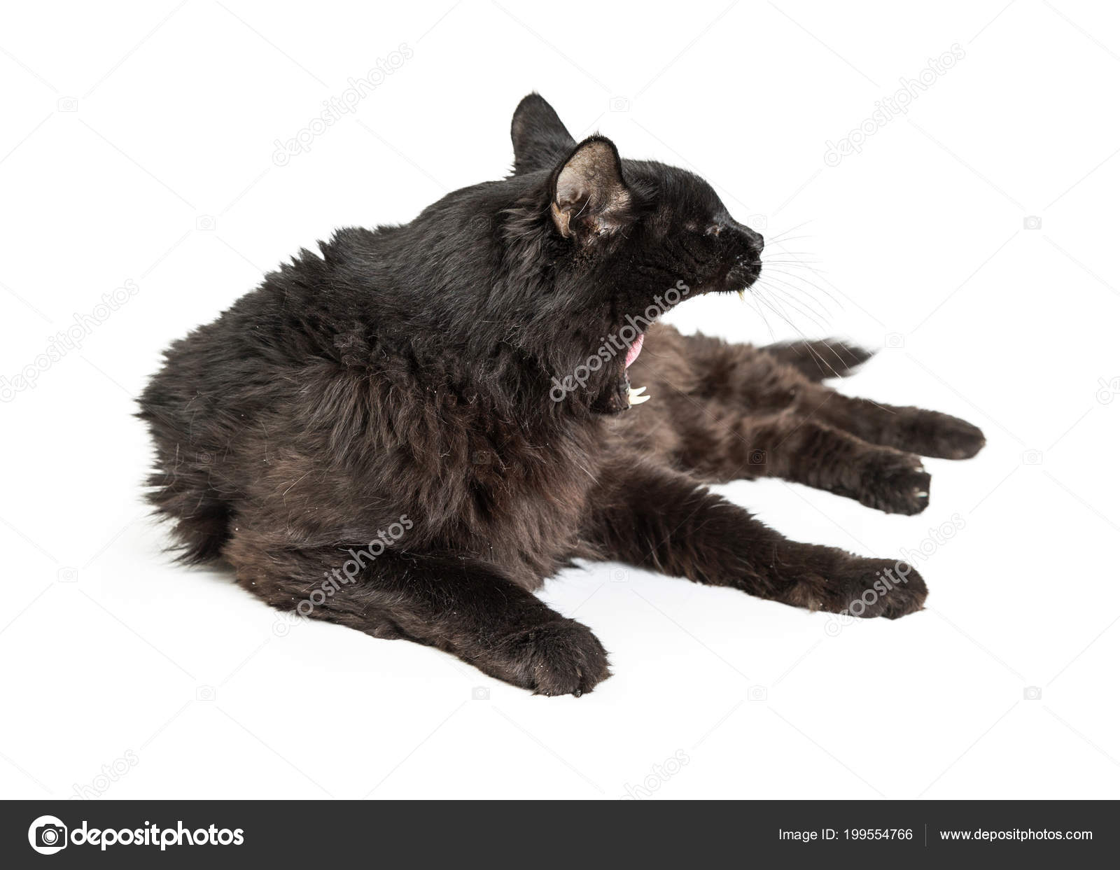 Black Cat Opened Wide Mouth Yawning Looking Side While Lying Stock