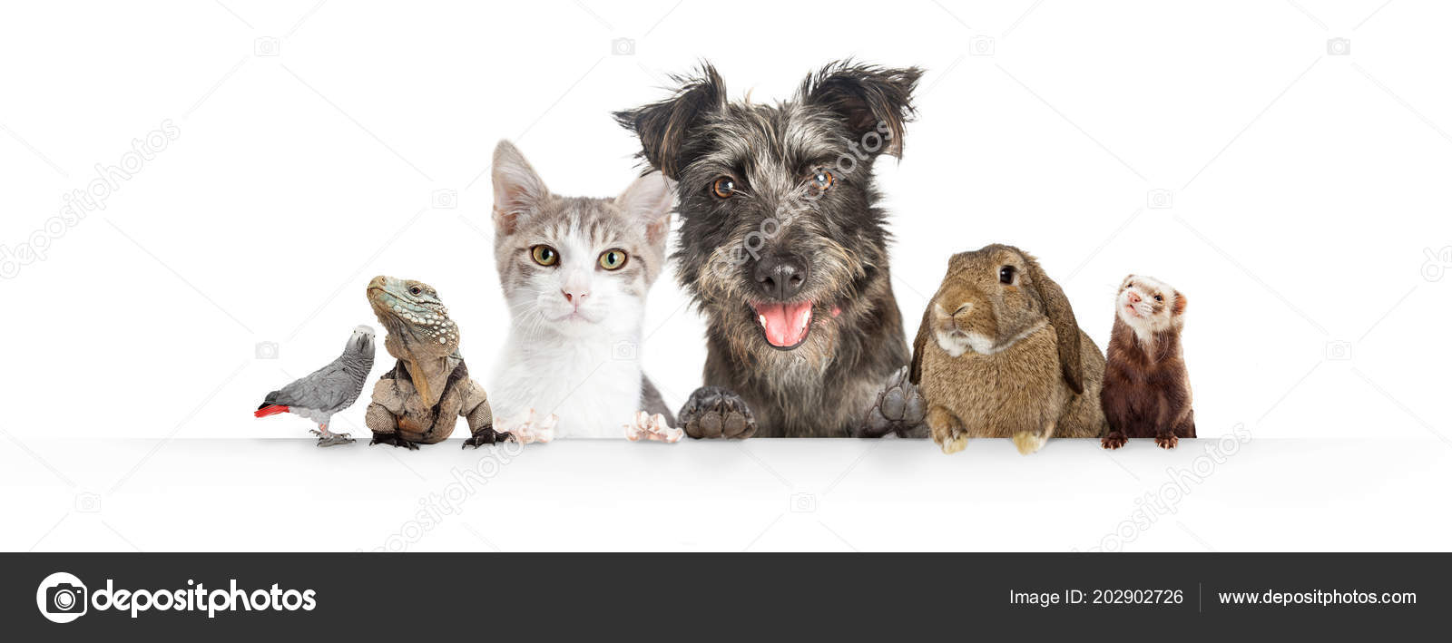 Pictures Cute Pet Website Common Cute Domestic Animal Pets Hanging White Horizontal Website Banner Stock Photo C Adogslifephoto 202902726