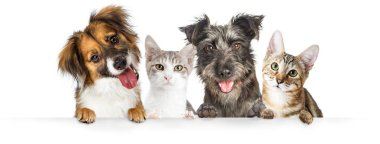 Cute dogs and cats together hanging paws over white horizontal website banner or social media header