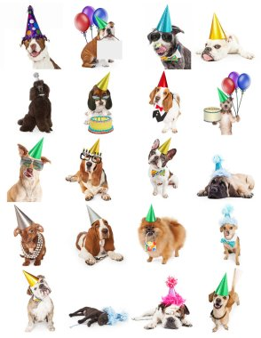 Set of twenty cute and funny photos of dogs celebrating birthdays and parties. Sized to print on letter paper or for use on websites or social media.