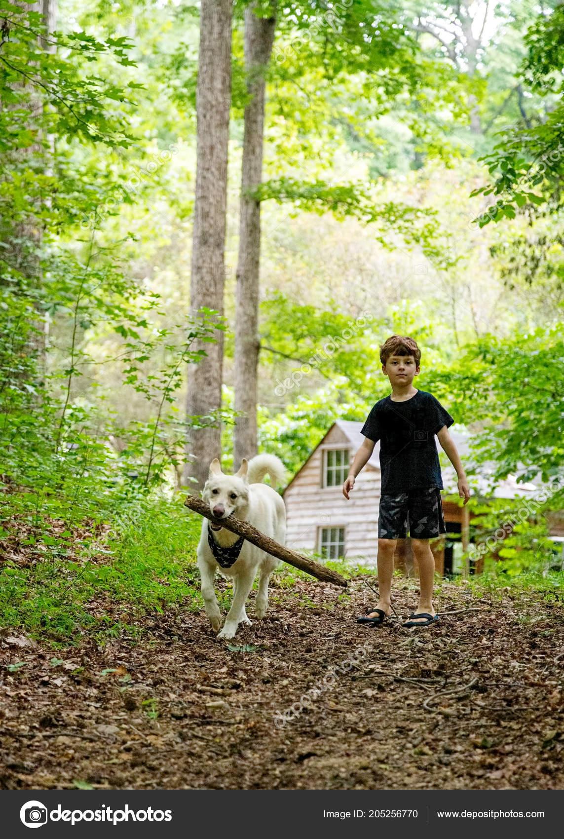 Cute Young Boy Large Breed White Dog Carrying Big Stick — Stock Photo ©  adogslifephoto #205256770
