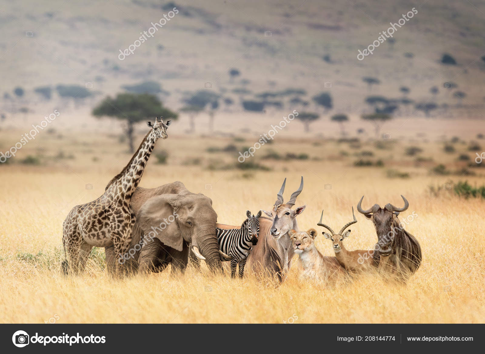 Group of wild animals together - photo#52