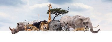 Large group of African safari or zoo animals hanging over a white horizontal web banner or social media header with cloudy sky background