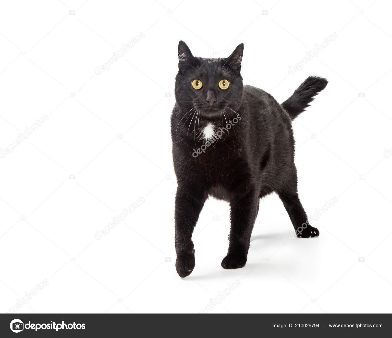 Kočička jíst černí muži