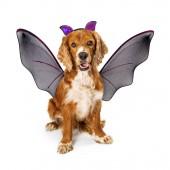 Fotografia Carina Cocker Spaniel cane indossa bat costume di Halloween con le ali nere e le orecchie su archetto