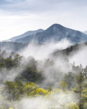 low clouds covering mountain tops in the Great Smoky Mountains National Park in Tennessee, USA