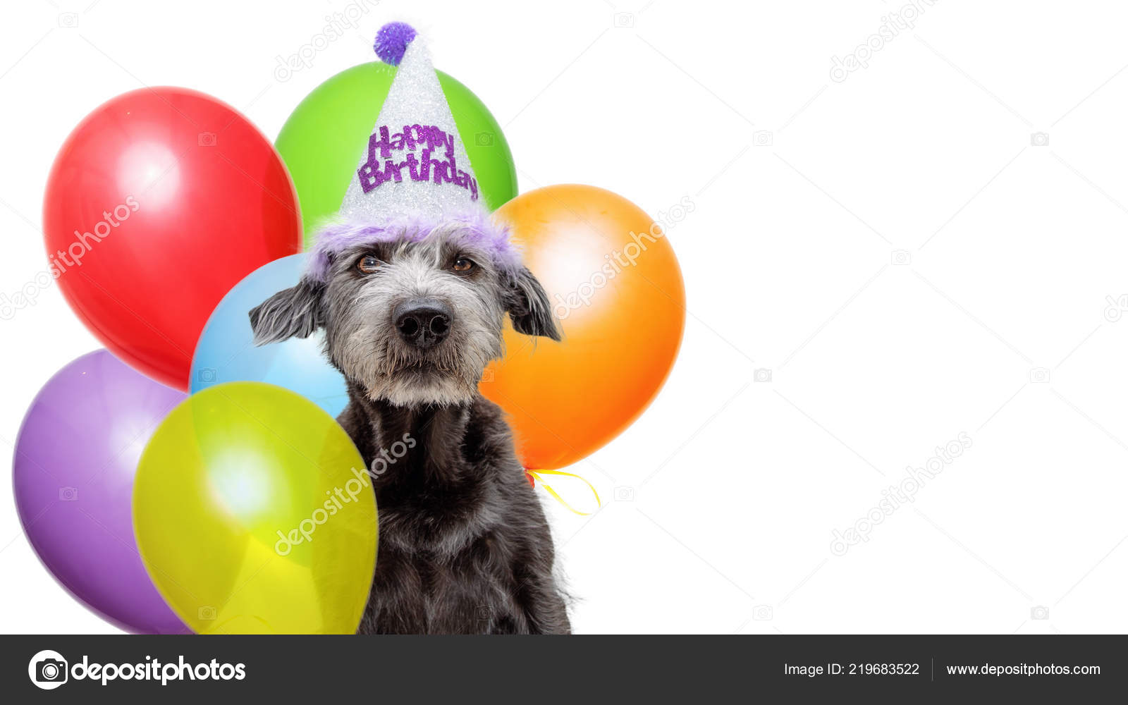 Funny Scruffy Dog Wearing Happy Birthday Party Hat Bouquet Colorful Stock Photo