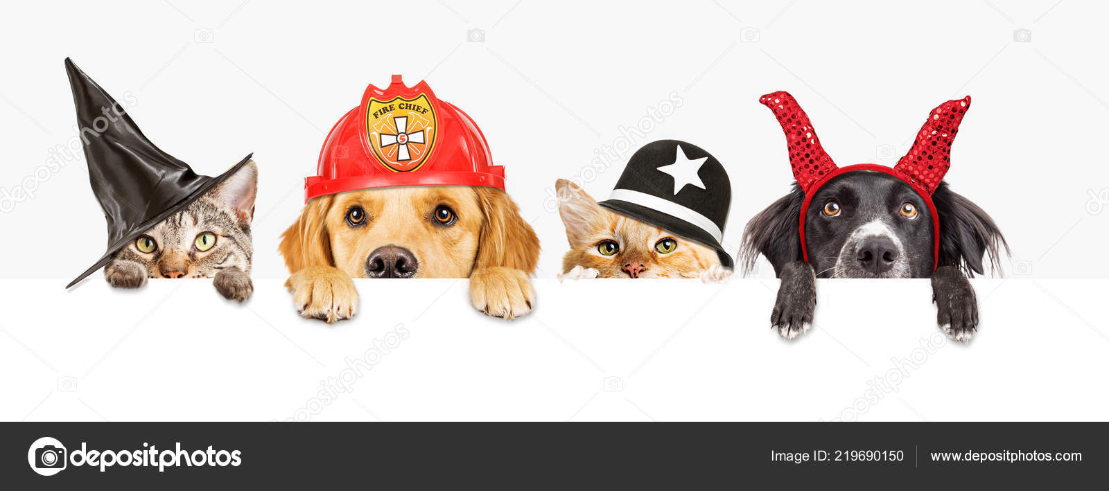 Pictures Halloween Dogs Row Cats Dogs Wearing Halloween Costumes Hanging Blank White Banner Stock Photo C Adogslifephoto 219690150