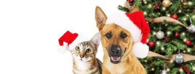 Cute Christmas dog and cat wearing Santa Claus hats near tree isolated on white background, close-up