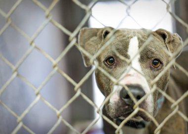 Sad homeless dog looking through fence at animal shelter