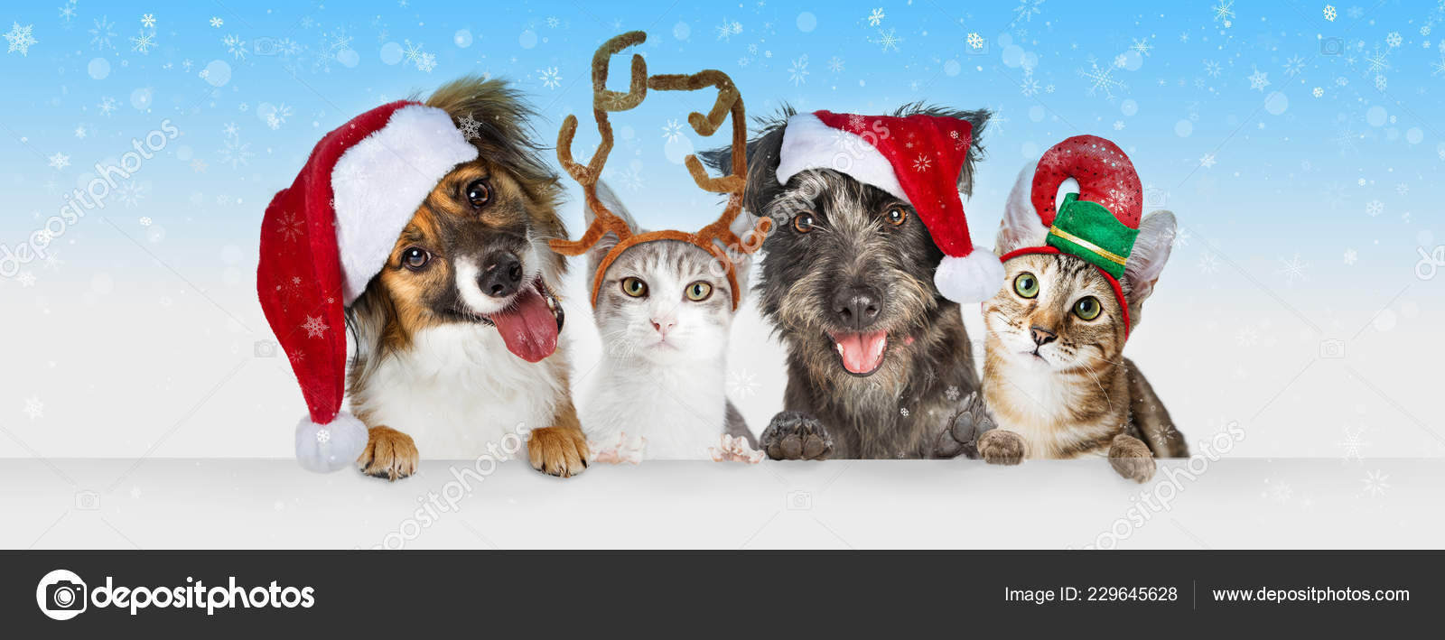 Cute Christmas Dogs Cats Santa Claus Hats Together Hanging Paws Stock Photo C Adogslifephoto 229645628