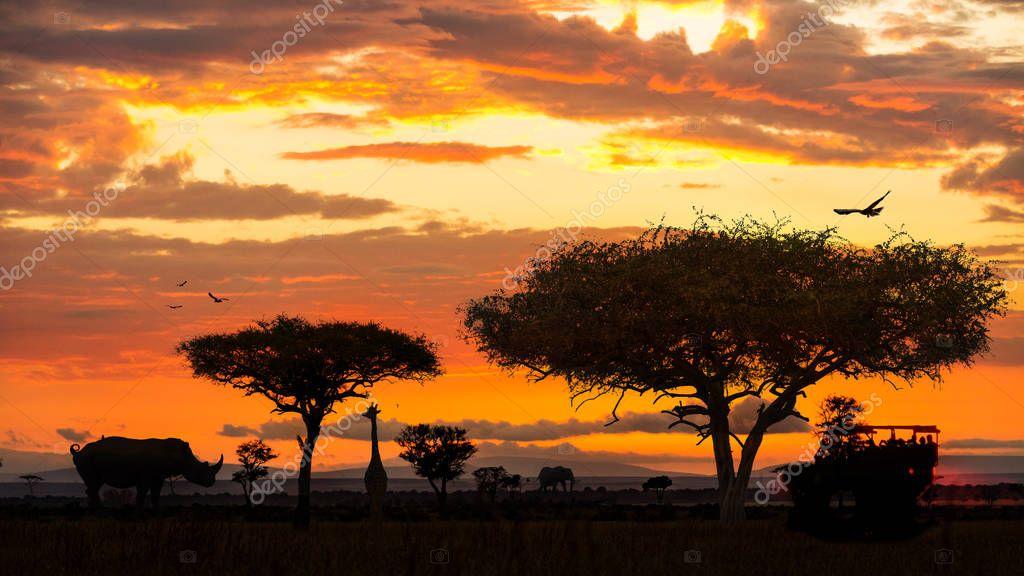 African wildlife animal safari drive during golden sunset scene