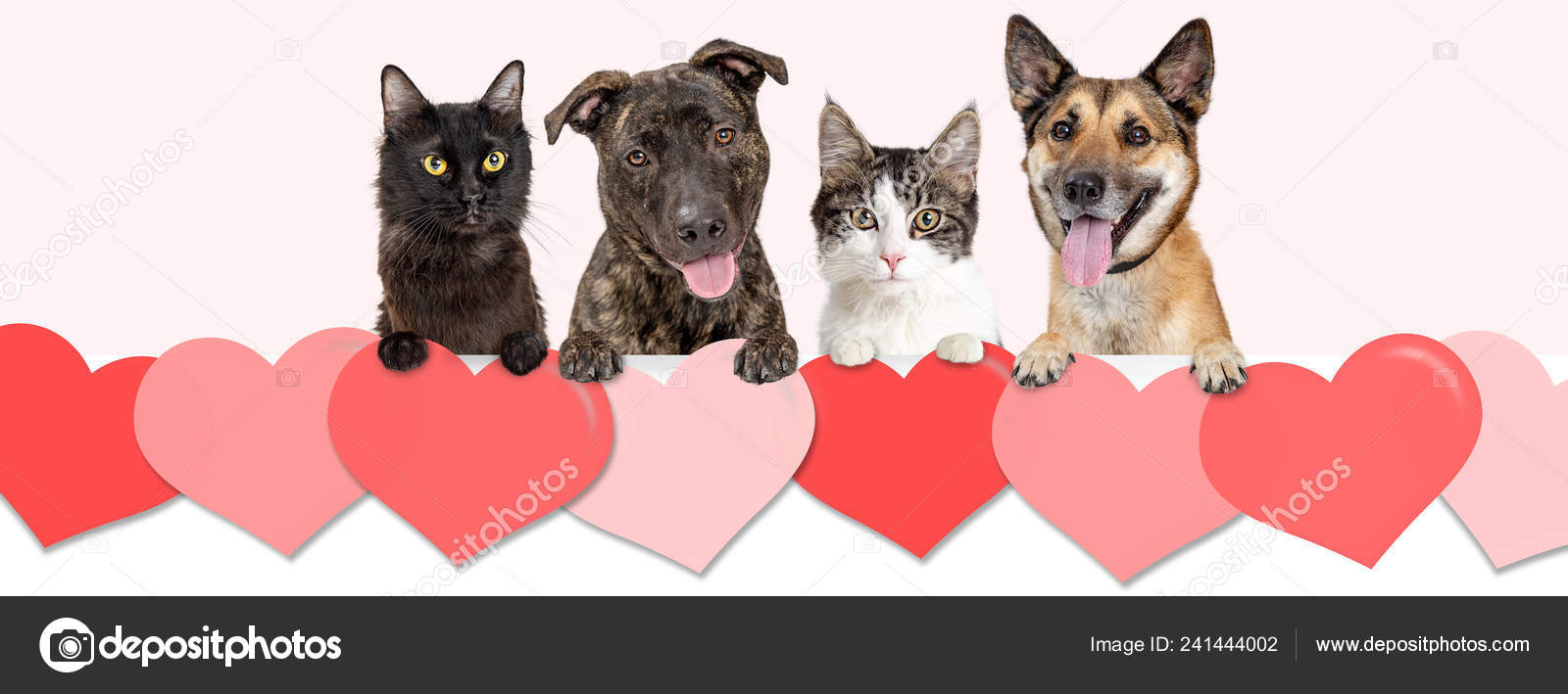 Dogs Cats Hanging Row Valentine Day Hearts Website Banner Social Stock Photo C Adogslifephoto 241444002