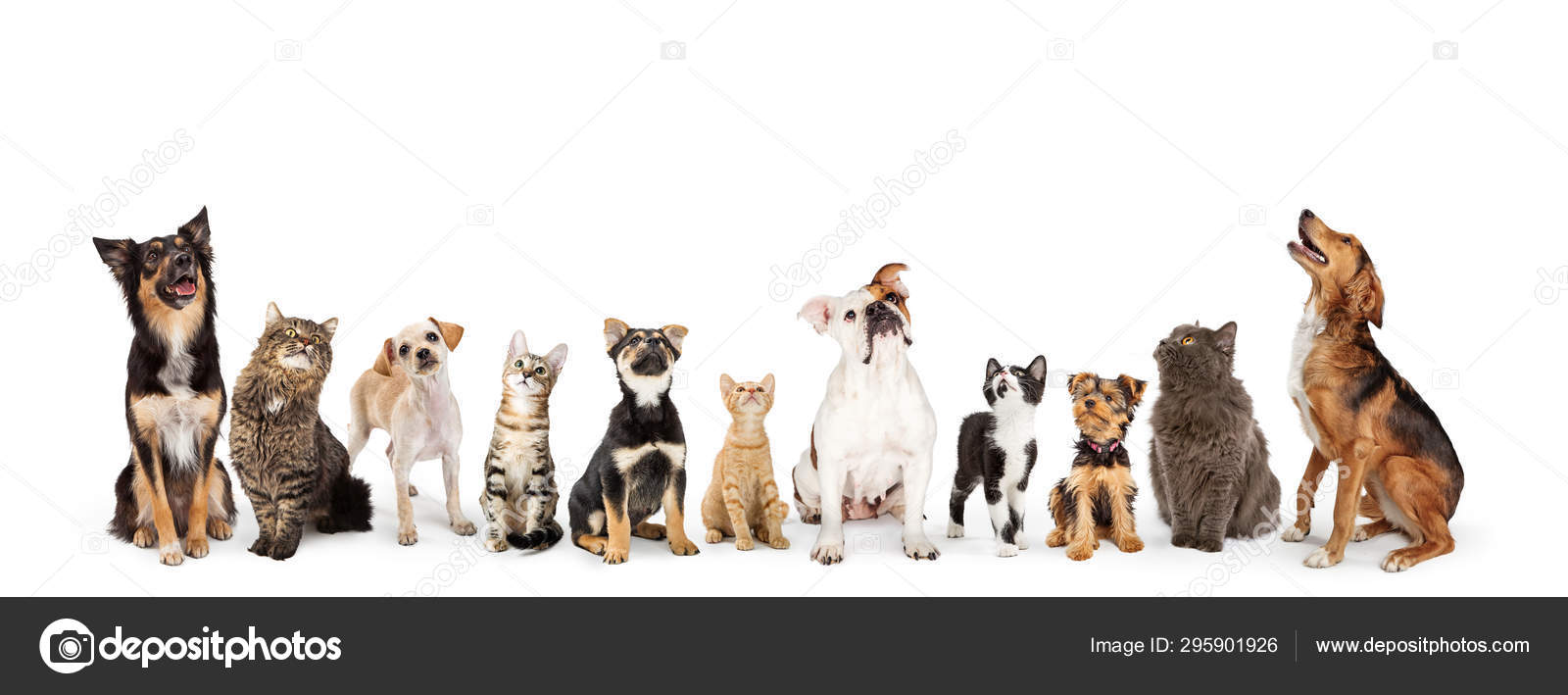 Dogs And Cats Looking Up Into Web Banner Stock Photo C Adogslifephoto 295901926