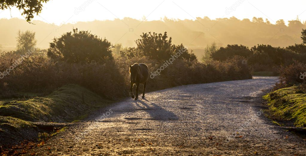 Horse on a road during sunrise in New Forest, Hampshire, England