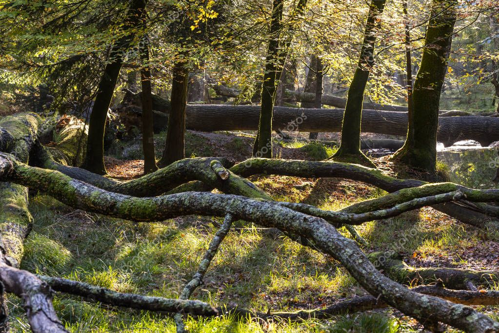Autum trees with colored leaves in National Park New Forest, England.