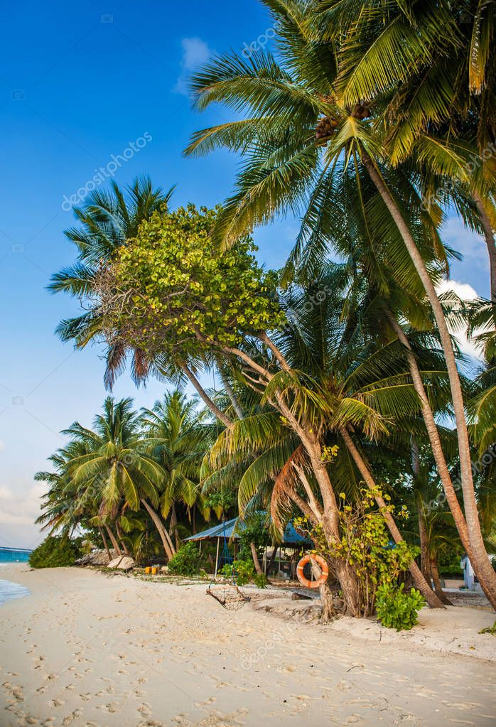 Tropical beach in Maldives.Tropical Paradise at Maldives with palms, sand and blue sky