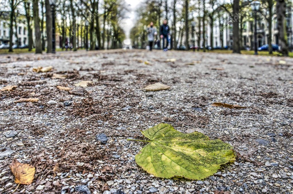 Fallen leaf of a linden tree at Lange Voorhout square in The Hague, The Netherlands in autumn