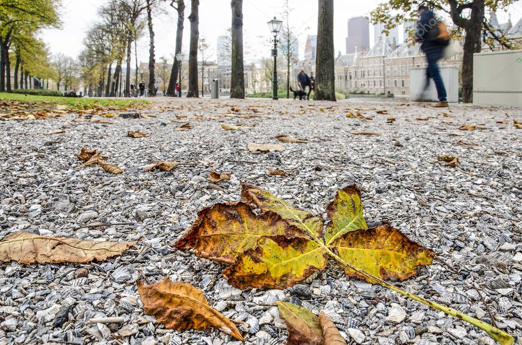 Fallen chestnut leaves on a gravel surface at Lange Vijverberg in The Hague, The Netherlands in autumn