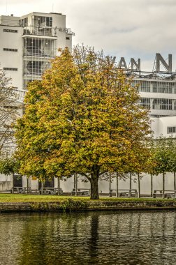 Rotterdam, The Netherlands, October 20, 2018: Chestnut tree in autumn colors in front of the Van Nelle facory Unesco world heritage