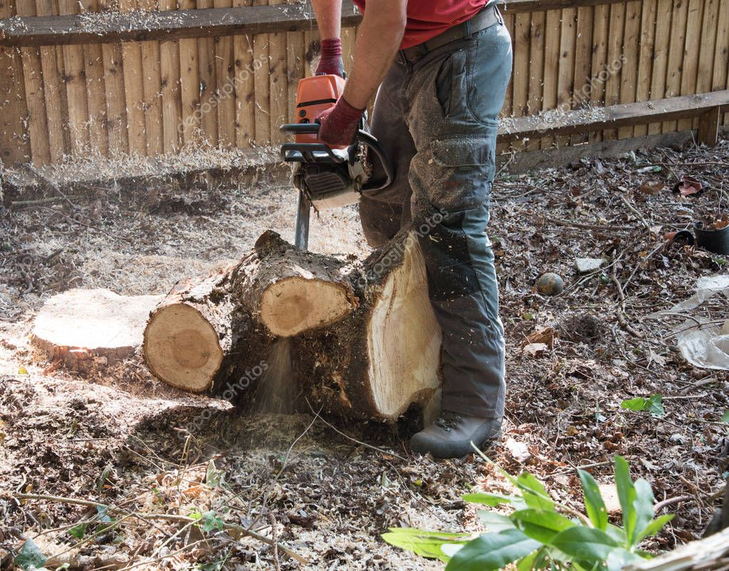 A Tree Surgeon uses a chainsaw to cut through a small branch.