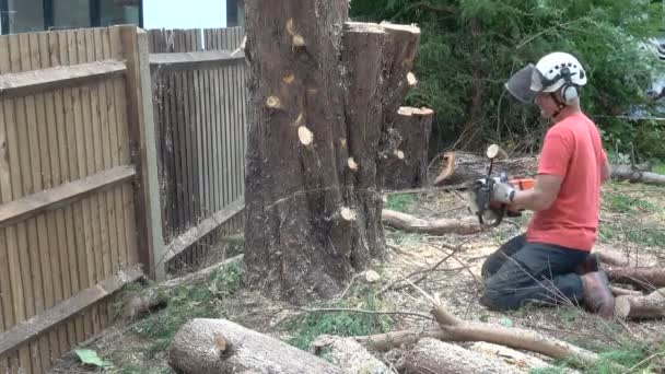 Baumpfleger durchschnitt mit Kettensäge einen Baumstamm