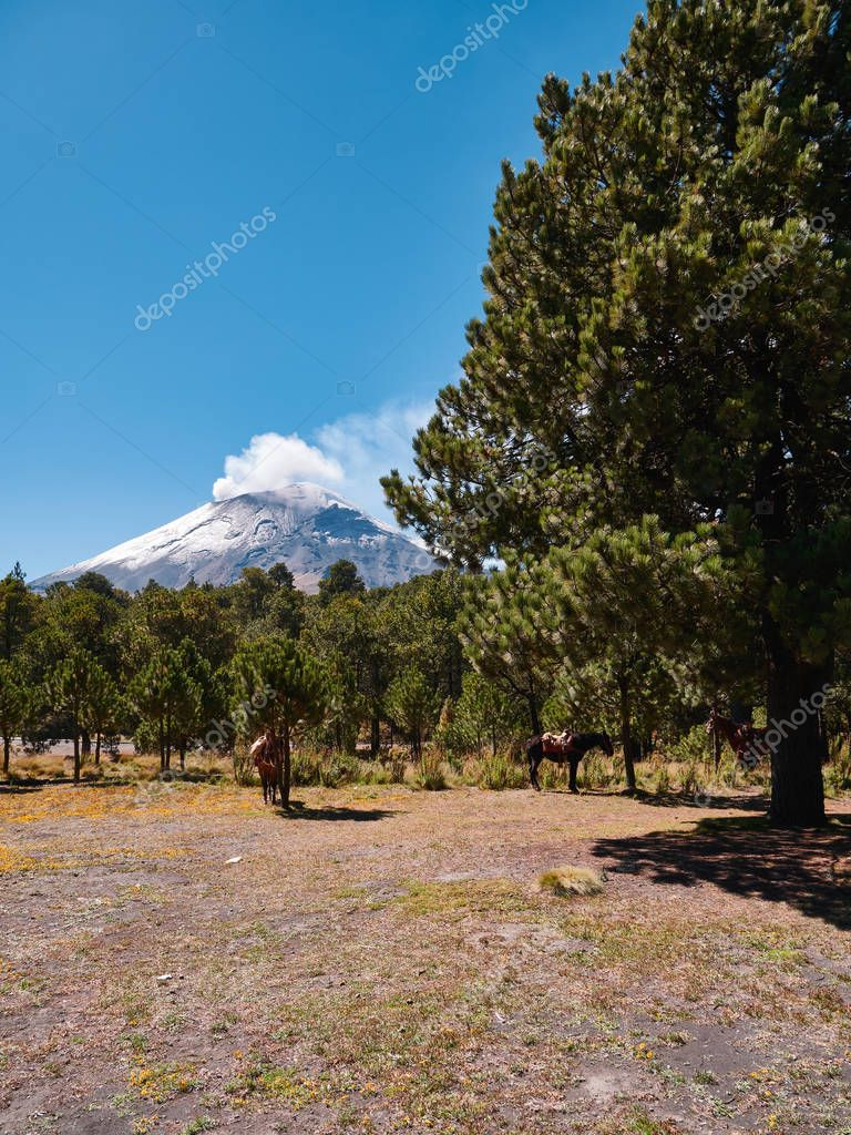 Itza-Popo National Park with horses and Popocatepetl volcano in background, Mexico