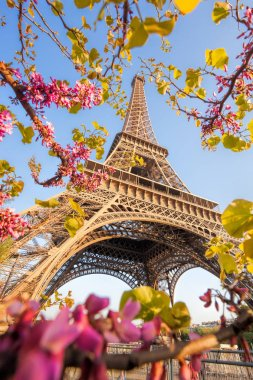Eiffel Tower during spring time in Paris, France